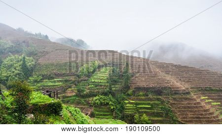 View Of Hills With Terraced Rice Fields In Rain