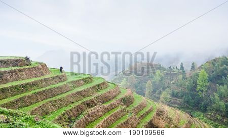 Above View Of Terraced Rice Plantations On Hills