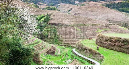 View Of Grounds Near Dazhai Village In Country