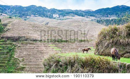 Rural View Of Near Dazhai Village In Country