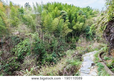 Thicket And Path On Mountain Slope In Dazhai