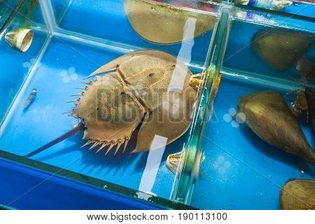 Horseshoe Crab In Fish Market In Guangzhou City