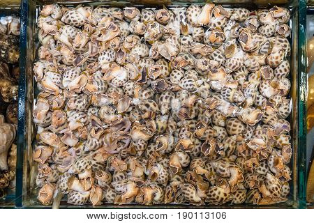 Many Water Snails In Fish Market In Guangzhou City
