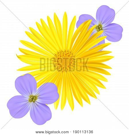 Forget-me-not Light Blue Viola Flower and yellow daisy Isolated on White Background