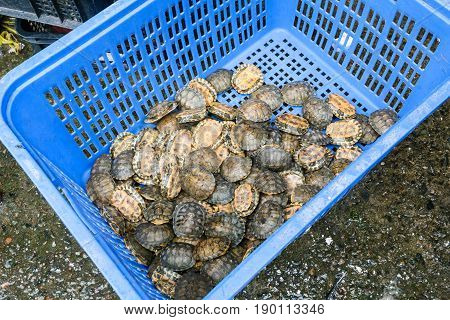 Little Turtles In Box In Fish Market In Guangzhou