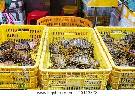 Many Turtles In Boxes In Fish Market In Guangzhou