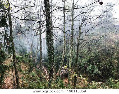 Overgrown Tree Trunks In Mist Rainforest