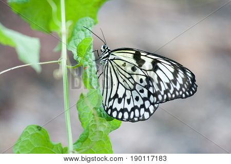 Butterfly In The Nature Green Forest Habitat