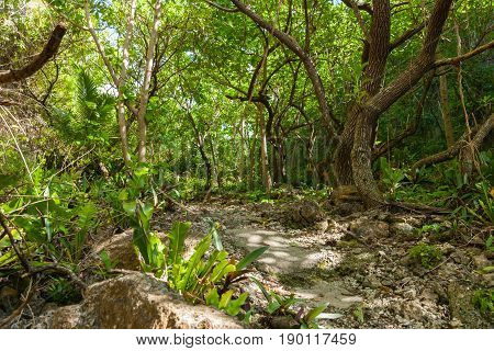 lush green tones of stunning bush walk to wonderful Matapa Chasm a popular travel destination on island of Niue in South Pacific