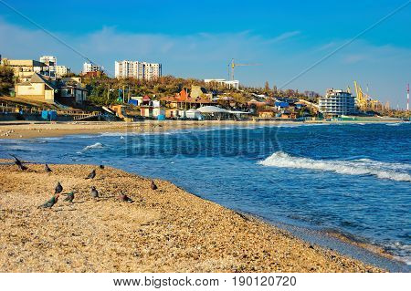 A flock of pigeons on the sand near the breaking waves. Coast of the Black Sea in Chornomorsk, Odessa province of south-western Ukraine.
