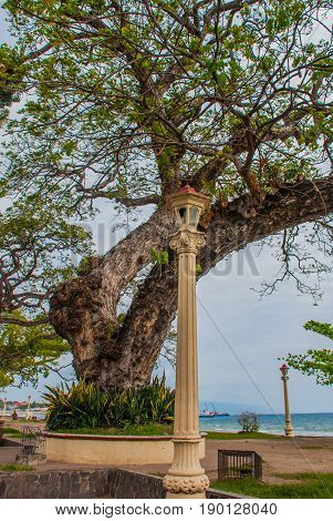 Waterfront with beautiful trees in cloudy weather. Dumaguete City, Philippines