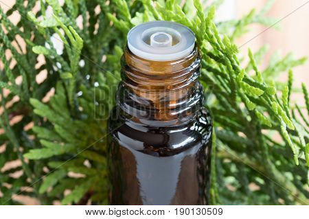 A Bottle Of Thuja Essential Oil With Fresh Thuja Twigs