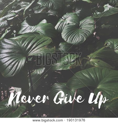 Never Give Up Word on Leaves Background