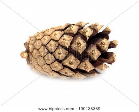 cedar pine cone isolated on white background .