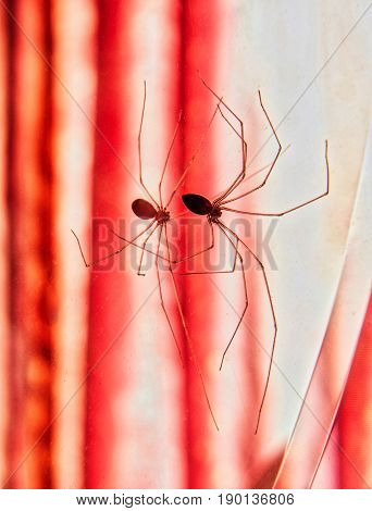 Spider reflected in the mirror of a bathroom