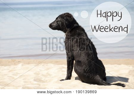 Speech Balloon With English Text Happy Weekend. Flat Coated Retriever Dog At Sandy Beach. Ocean And Water In The Background