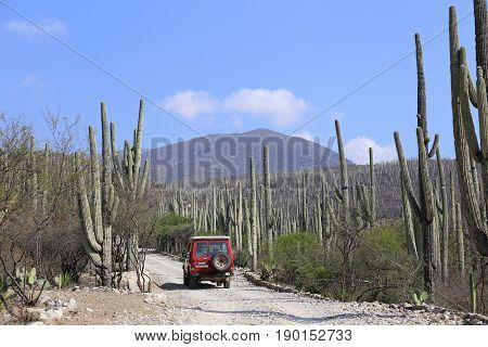 Toyota Landcruiser in the Cactus Fields of the Jardin Botanico Helia Bravo Hollis in Mexico, February 2015
