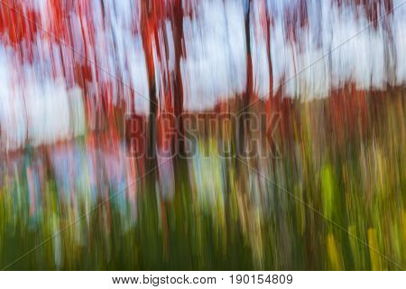 Abstract landscape of red autumn maple trees on lake shore in fall. Image produced by camera motion.