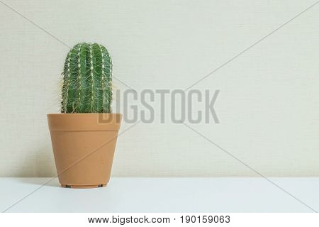 Closeup fresh green cactus in brown plastic pot for decorate on blurred wooden white desk and wall textured background in room in black and white tone with copy space