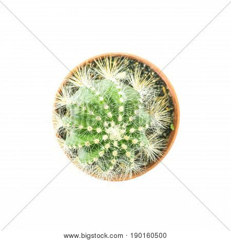 Closeup fresh green cactus in brown plastic pot for decorate isolated on white background in top view
