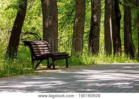 Empty Wooden Park Bench In The Shade Under Old Trees. Spring In The Park.