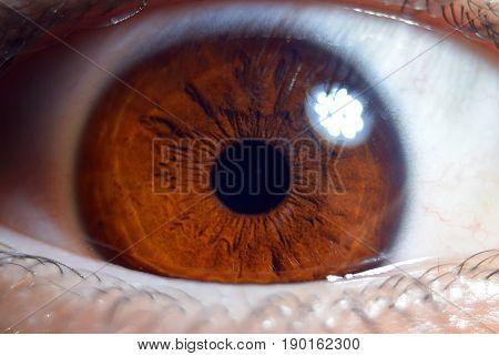 Extreme Closeup Macro On Human Male Eye