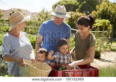 Grandparents With Adult Daughter And Grandchildren On Allotment