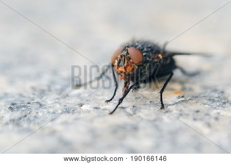 Fly on gray granite slab. Shallow depth of field background with insect