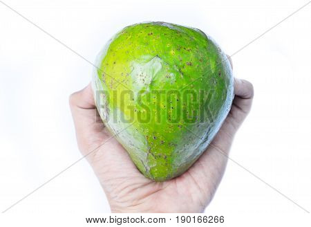 Fresh avocado fruit that is being grasped