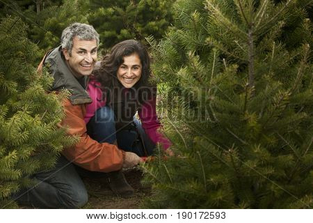 Smiling couple picking out Christmas tree