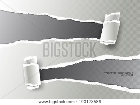 Realistic ripped paper torn stripe and curl paper on transparent background, vector illustration