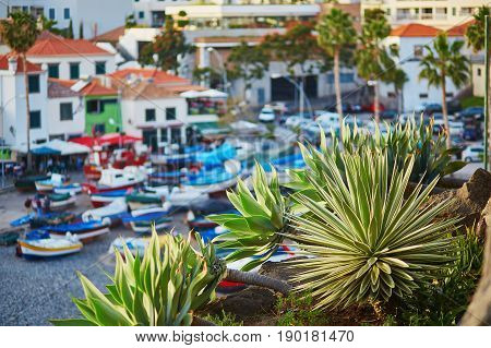 Camara De Lobos Fishing Village With Palm Tree In The Foreground. Madeira Island, Portugal