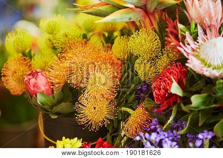 Protea Flowers At Market On Madeira