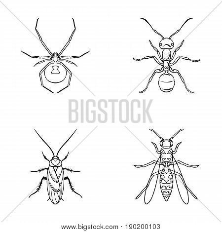 Spider, ant, wasp, bee .Insects set collection icons in outline style vector symbol stock illustration .