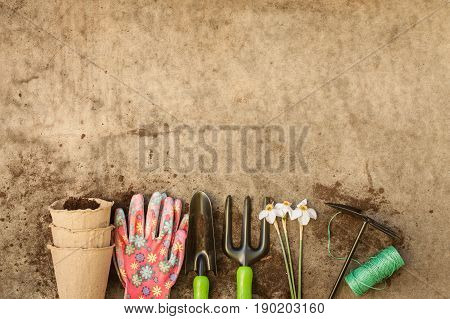 Peat Pots Glove Fork Scoop Hoe Roll Rope And Flowers Narcissus On Old Dirt Wooden Gray Board With Copyspace Top View.