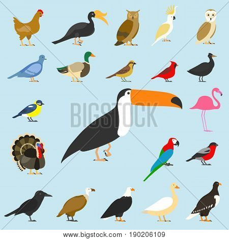 big set of tropical, domestic and other birds, cardinal, flamingo, owls, eagles, bald, sea, parrot, goose. raven. sparrow chicken turkey cockatoo pigeon toco toucan hornbill griffon duck