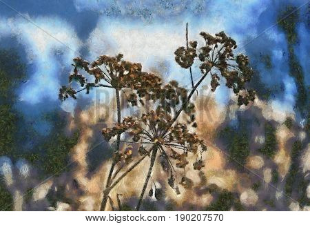 Illustration with Umbrellas Aegopodium podagraria. Digital imitation of an oil painting.