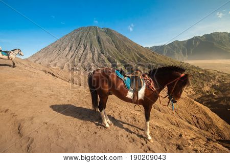 the horse in Bromo mountain, in Indonesia