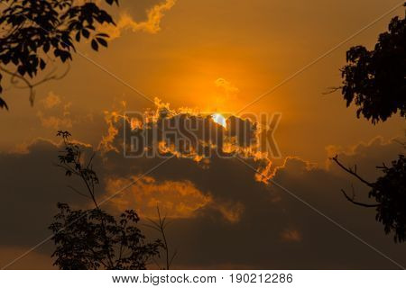 Sunshine and sun clouds with leaf tree silhouette