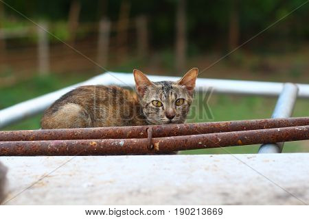 A brown and black kitty cat is sitting behind the stain pipes considering itself's hiding