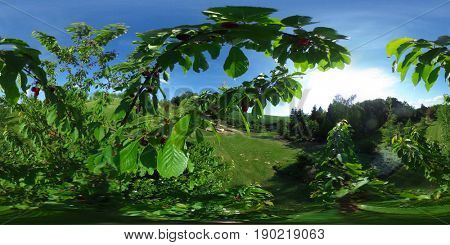 360 degrees spherical panorama of Arboretum Wojslawice. Branch of the Botanical Garden of the University of Wroclaw, Poland.