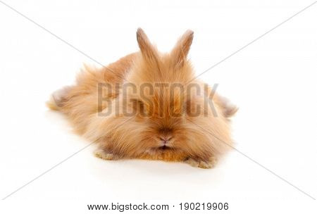 Beautiful brown rabbit toy with long and soft hair lying down isolated on a white background