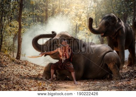 Thailand The man is a mahout for control elephants and blowing instruments for Elephant