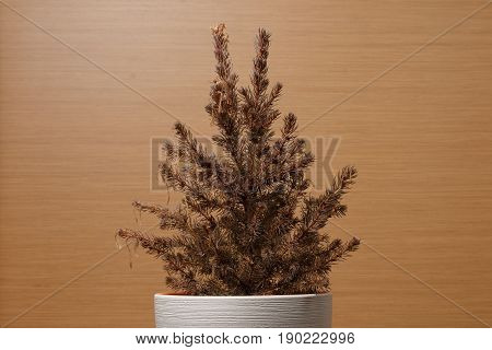 Fir-tree In A White Pot On A Wooden Background.