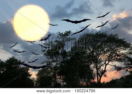 Halloween day bat Vampire flying horrifying in forest and sky for background with copy space for add text