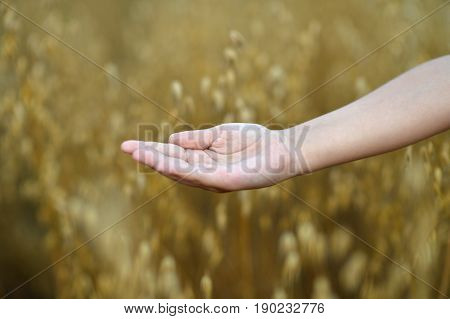 close up view of child holding open palm against field of ripe wheat