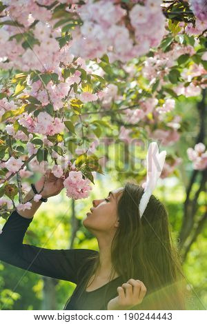 woman with long brunette hair and rosy bunny ears smelling blossoming sakura flowers from tree in spring park on sunny day on blurred floral environment. Easter. Springtime