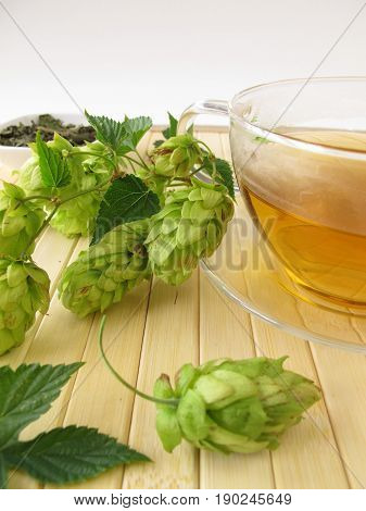 Cup of herbal tea with hops and fresh hops cones