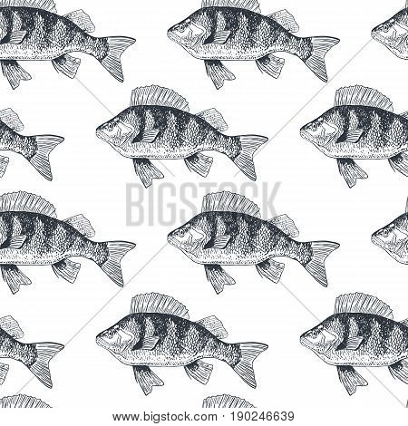 Fish perch seamless pattern, isolated black and white, side view, hand drawn