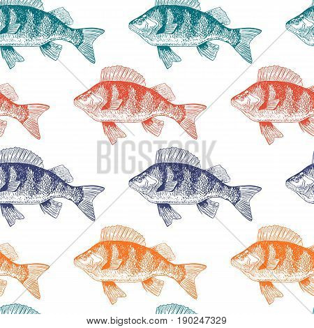 Fish perch seamless pattern, isolated colorful, side view, hand drawn